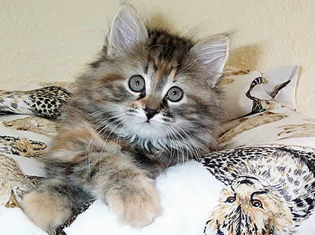 gef hrlich f r eine schwangere katze mit w rmern. Black Bedroom Furniture Sets. Home Design Ideas